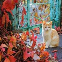 Осенний котик :: оксана косатенко