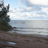 Ладожское озеро. Октябрь :: Елена Павлова (Смолова)