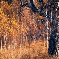 Осень. :: Георгий