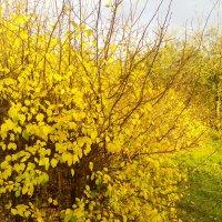 Яркие краски осени :: Татьяна Королёва