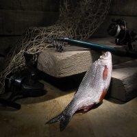 Кто о чём, а рыбак о рыбе. :: Сергей Фунтовой