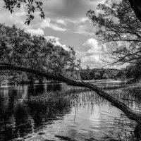 На реке Цне.......... :: Александр Селезнев