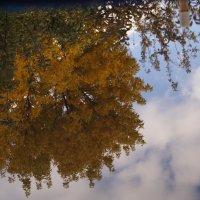 Осень, отраженная в воде :: Gal` ka