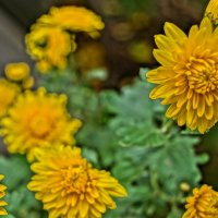 Осенние цветы в стиле живопись :: Gal` ka