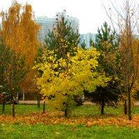 Осенние краски. :: Александр Атаулин