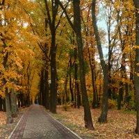 Осеннее.... :: георгий петькун