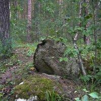 Лес :: Вера Щукина