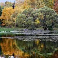 У озеро , вчера. :: Viacheslav Birukov