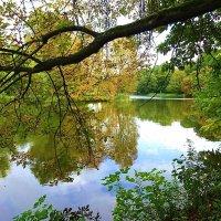 Парк Южный в красках октября :: Маргарита Батырева