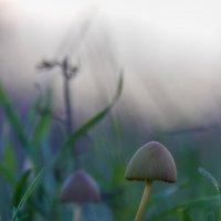 О грибах, наблюдающих вечер :: Алина Шостик