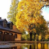 Осень и в луже...осень. :: Tatjana