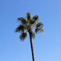 пальма :: андрей шилов