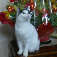 Домашние животные :: Рашид