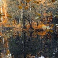 Осенний пруд. :: Ирэна Мазакина
