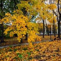 Осень берет свое... :: Anatoley Lunov