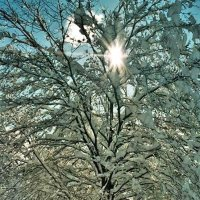 Мороз и солнце! :: Натали Пам