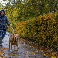 Человек собаке друг :: Борис Гольдберг
