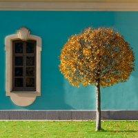 Дерево и окно :: Алексей Савченко
