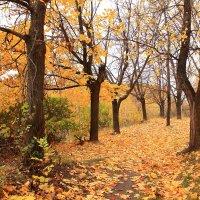 Клены сбрасывают листья :: Татьяна Ломтева