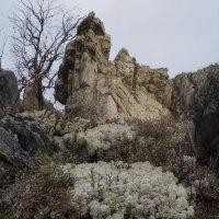 жители высокогорья 3 :: Константин Трапезников