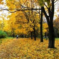 Золото в осени :: Виктор Калабухов