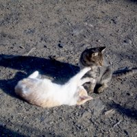 Кот и кошка играют :: Татьяна Королёва
