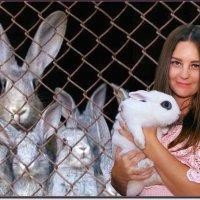 Из жизни кроликов... :: Anatol Livtsov