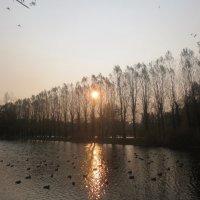 восходящее солнце :: Елена