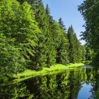 Лесной канал :: Сергей Добрыднев
