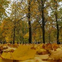 листья :: Владимир Д