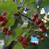 Осень :: Алёна Савина