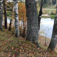 Я хожу, грущу один: Осень рядом где-то. Жёлтым листиком в реке утонуло лето./// :: Владимир ( Vovan50Nestor )