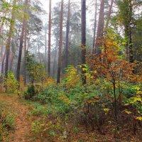Октябрём цветущие леса... :: Лесо-Вед (Баранов)