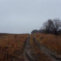 Дорога в осень :: Евгений