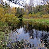 Грустная осень :: Светлана