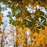 Небо сквозь листву :: Татьяна Бронзова