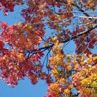 Осени краски :: Виктор Х.