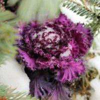 зимние цветы :: Anton Лилиенталь