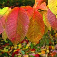 яркие цвета осени :: Горкун Ольга Николаевна
