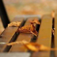 Осенний этюд. :: donat