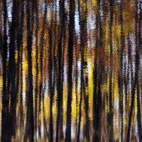 Осенний лес :: Алексей Федотов