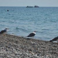 Ну ка, чайки, встань в ряд...... :: Ирина Никифорова