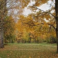 Осенние мотивы. В парке. :: Larisa