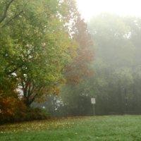Туман над лугом. :: Людмила Шнайдер