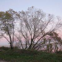 Розовый закат :: SaGa