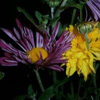 Цветы в ночи :: Оксана Шалаева