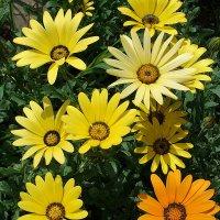 Золотой цветок :: svetlana.voskresenskaia