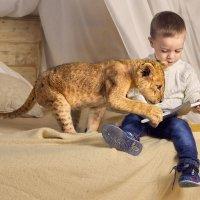 Любознательный львенок :: Наталья Мячикова