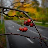 Осенью. :: Василий Ярославцев