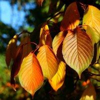 Осенние листья. :: Юрий. Шмаков
